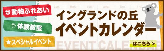 淡路島 イングランドの丘 イベントカレンダー